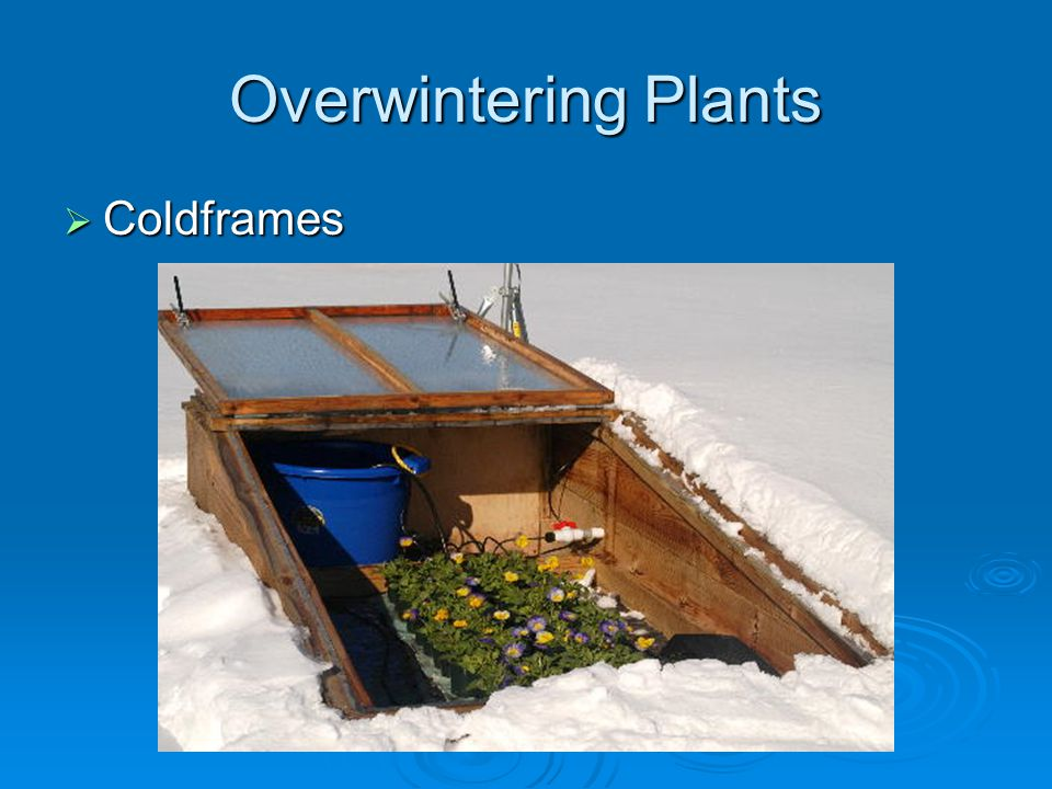 Overwintering Plants Coldframes Coldframes