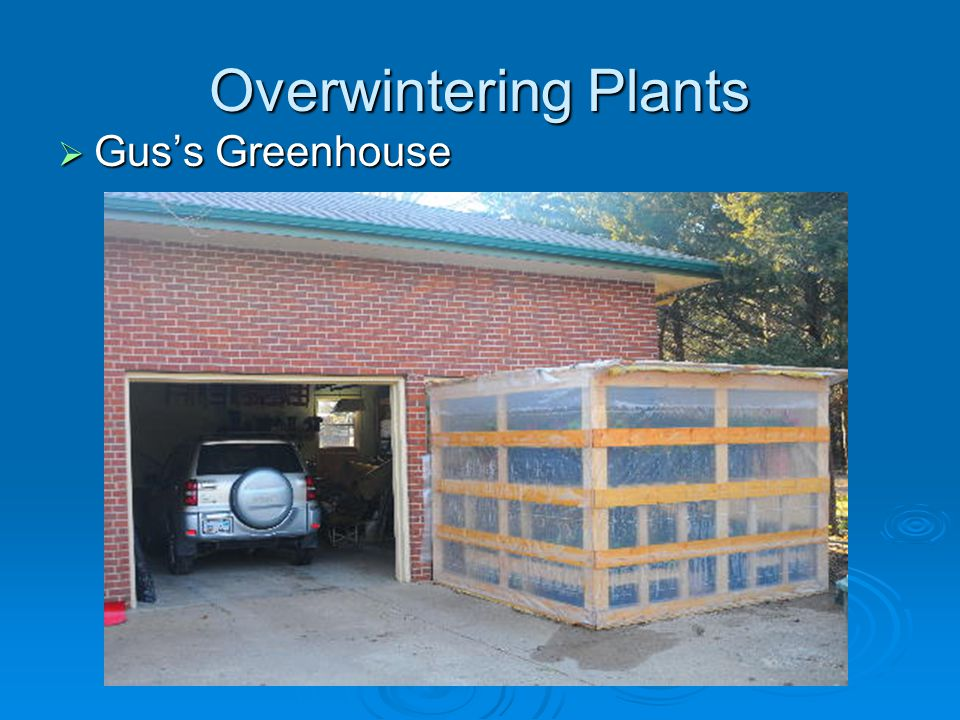 Overwintering Plants Guss Greenhouse Guss Greenhouse