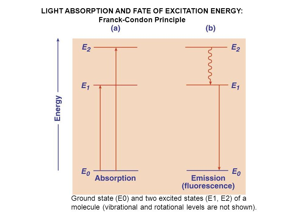 LIGHT ABSORPTION AND FATE OF EXCITATION ENERGY: Franck-Condon Principle Ground state (E0) and two excited states (E1, E2) of a molecule (vibrational and rotational levels are not shown).