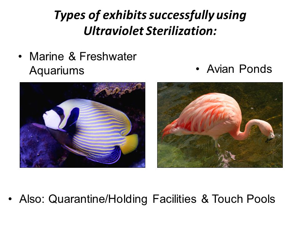 Types of exhibits successfully using Ultraviolet Sterilization: Avian Ponds Marine & Freshwater Aquariums Also: Quarantine/Holding Facilities & Touch Pools