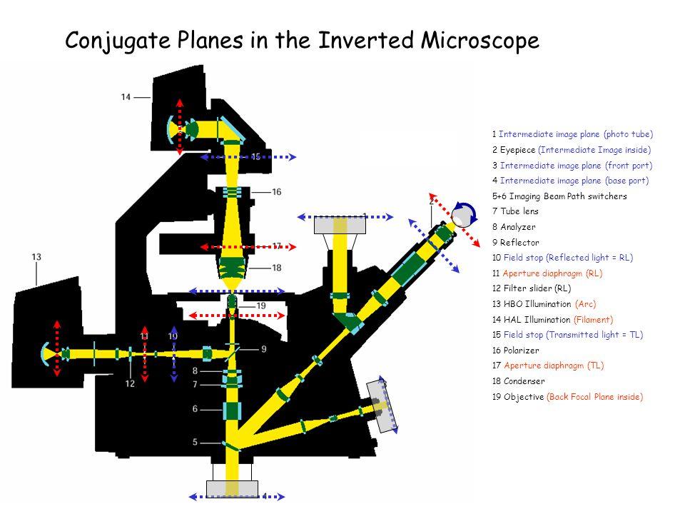 1 Intermediate image plane (photo tube) 2 Eyepiece (Intermediate Image inside) 3 Intermediate image plane (front port) 4 Intermediate image plane (bas