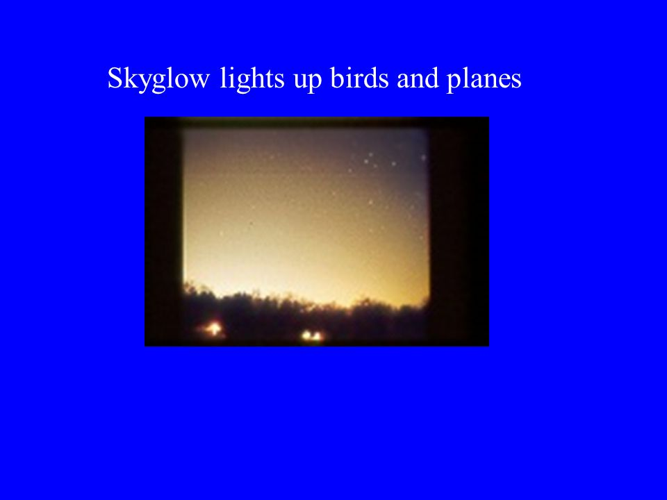 Skyglow lights up birds and planes