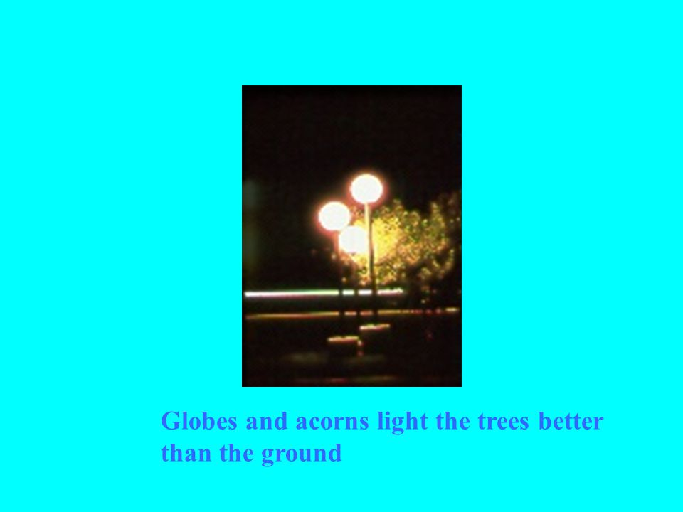 Globes and acorns light the trees better than the ground