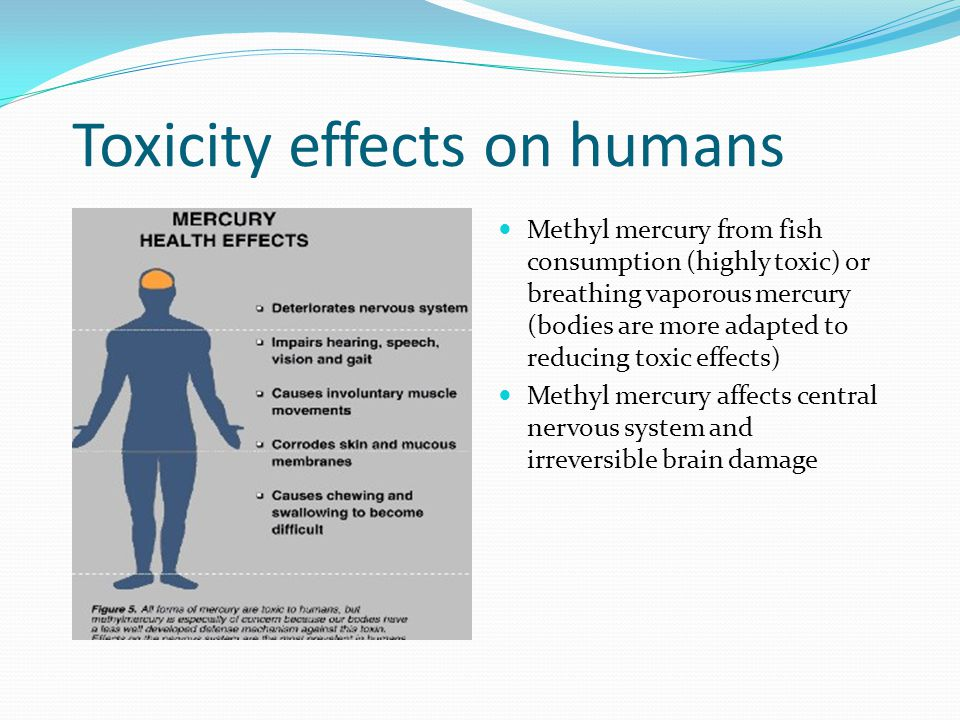 Toxicity effects on humans Methyl mercury from fish consumption (highly toxic) or breathing vaporous mercury (bodies are more adapted to reducing toxic effects) Methyl mercury affects central nervous system and irreversible brain damage