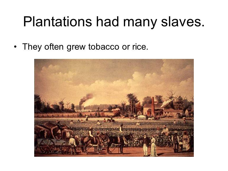 Plantations had many slaves. They often grew tobacco or rice.