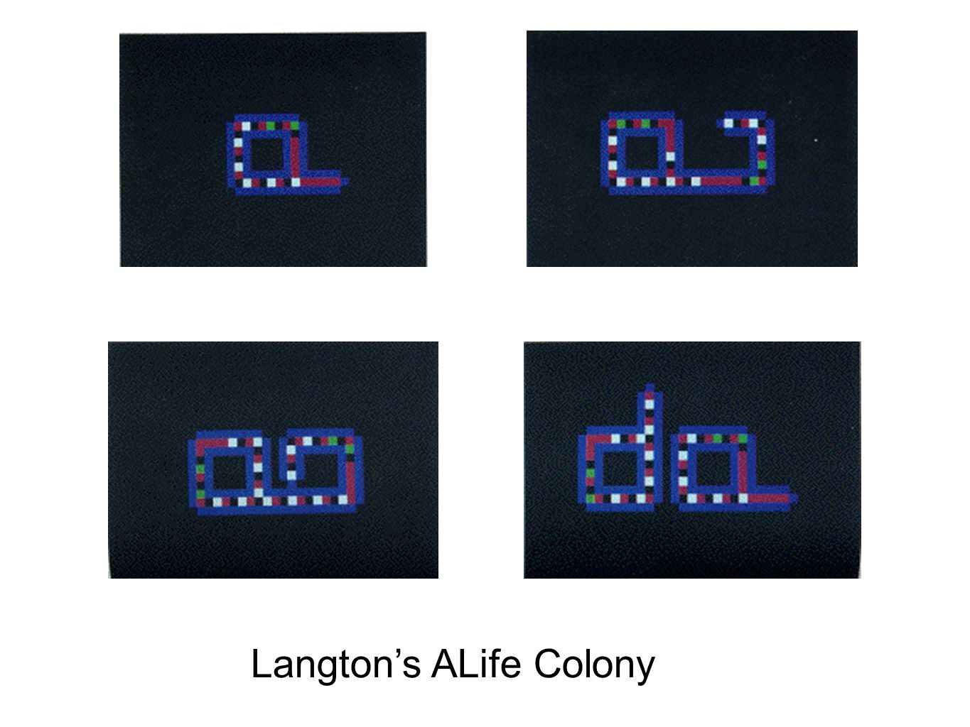 Langtons ALife Colony