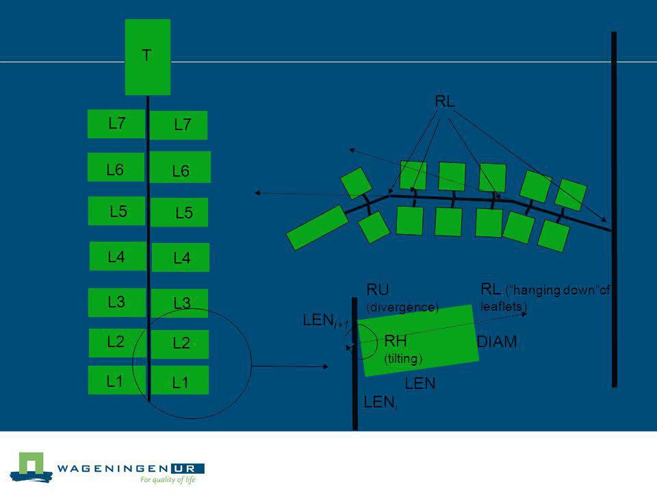 LEN i LEN i+1 RU (divergence) RL LEN DIAM RH (tilting) L1 L2 L3 L4 L5 L6 L7 L1 L2 L3 L4 L5 L6 L7 T RL (hanging downof leaflets)