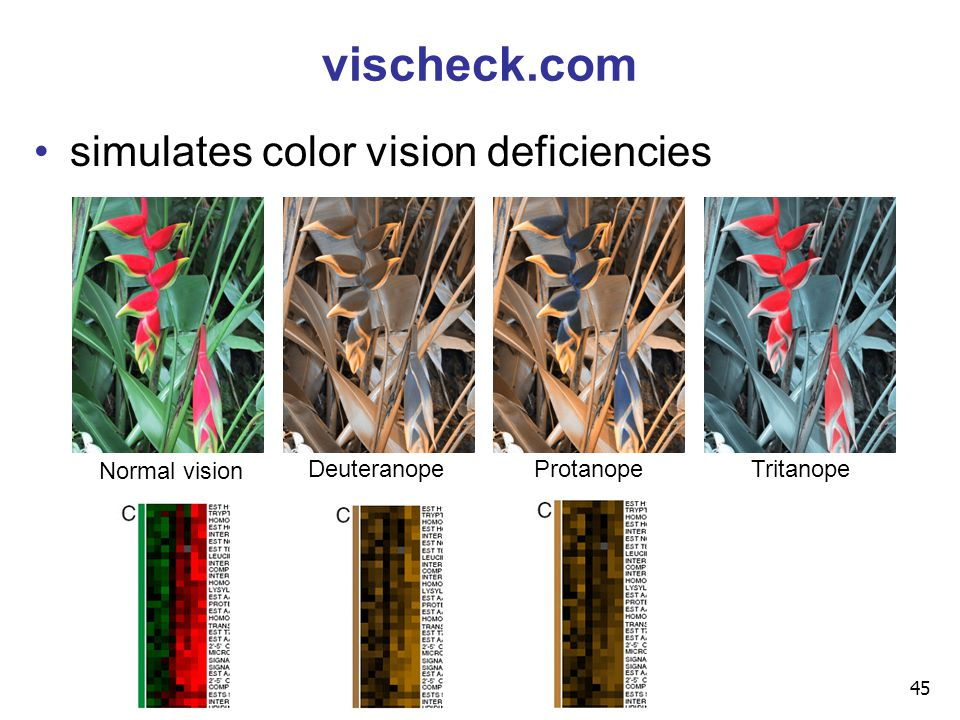 45 vischeck.com simulates color vision deficiencies DeuteranopeProtanopeTritanope Normal vision
