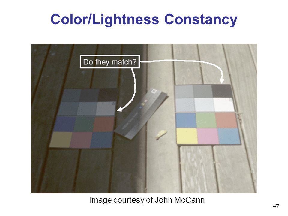 47 Color/Lightness Constancy Image courtesy of John McCann