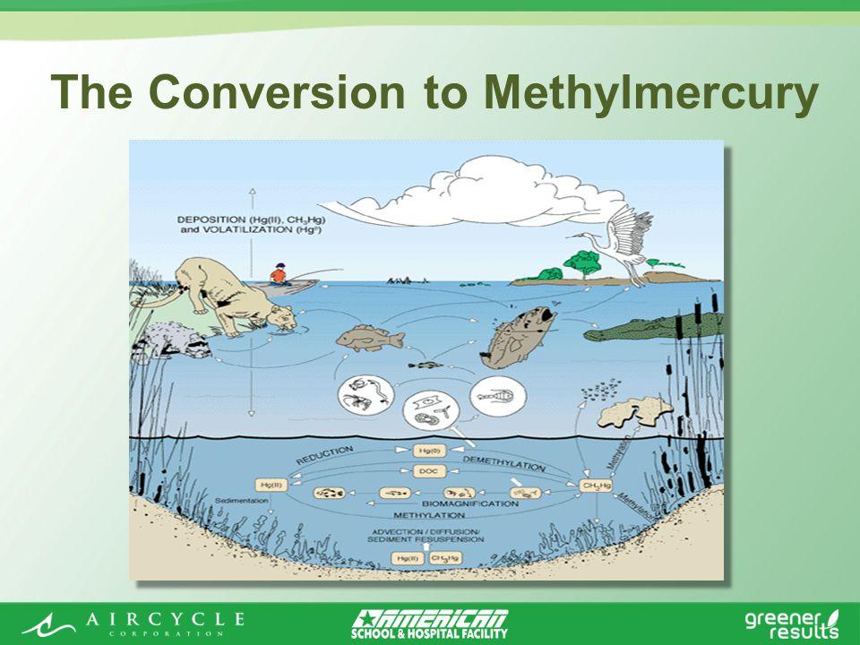 The Conversion to Methylmercury