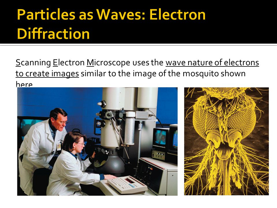 Scanning Electron Microscope uses the wave nature of electrons to create images similar to the image of the mosquito shown here.