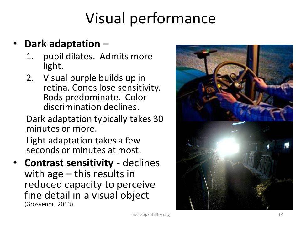 Visual performance Dark adaptation – 1.pupil dilates. Admits more light. 2.Visual purple builds up in retina. Cones lose sensitivity. Rods predominate