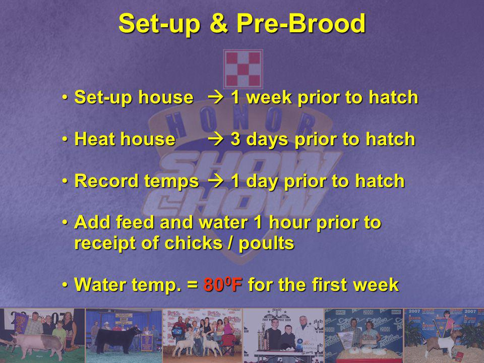 Set-up & Pre-Brood Set-up house 1 week prior to hatchSet-up house 1 week prior to hatch Heat house 3 days prior to hatchHeat house 3 days prior to hat