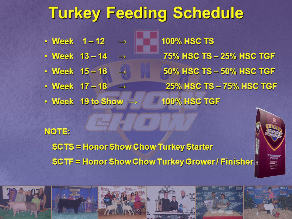 Turkey Feeding Schedule Week 1 – 12 100% HSC TSWeek 1 – 12 100% HSC TS Week 13 – 14 75% HSC TS – 25% HSC TGFWeek 13 – 14 75% HSC TS – 25% HSC TGF Week