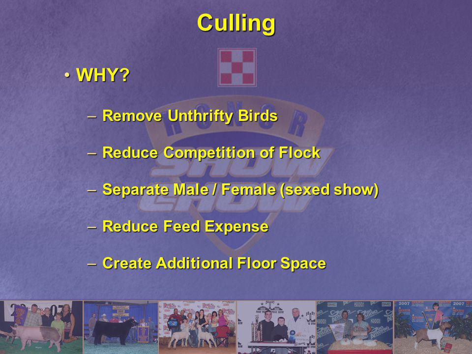 Culling WHY?WHY? –Remove Unthrifty Birds –Reduce Competition of Flock –Separate Male / Female (sexed show) –Reduce Feed Expense –Create Additional Flo