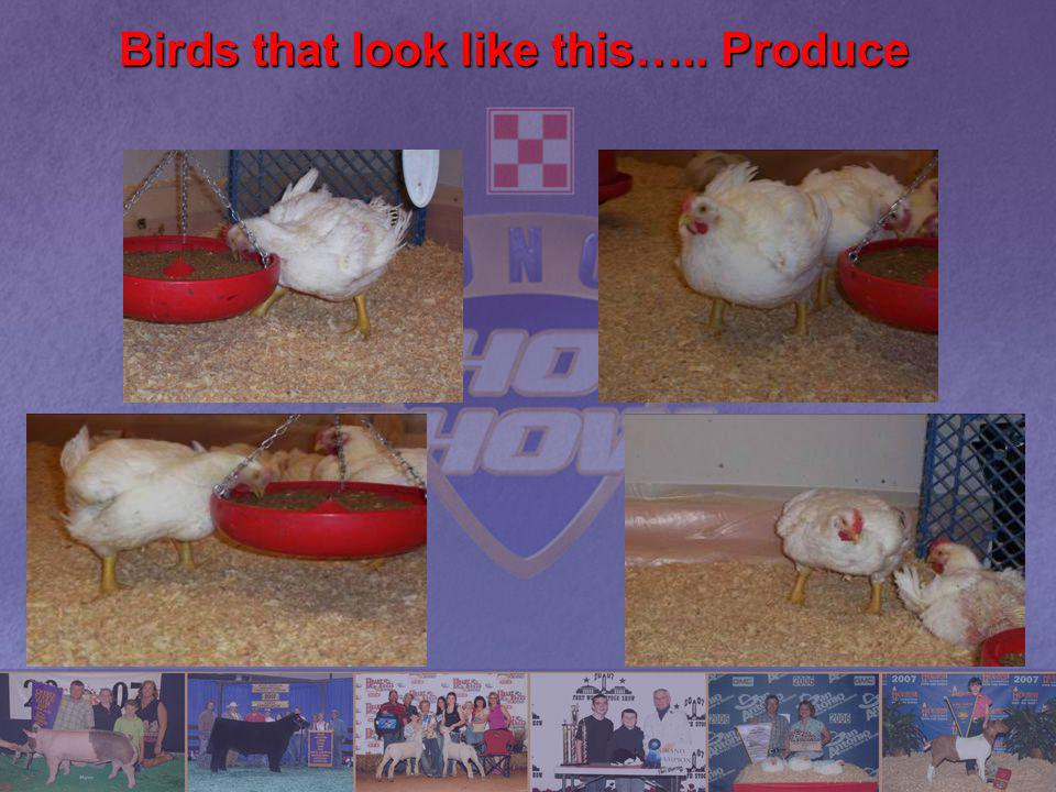 Birds that look like this….. Produce