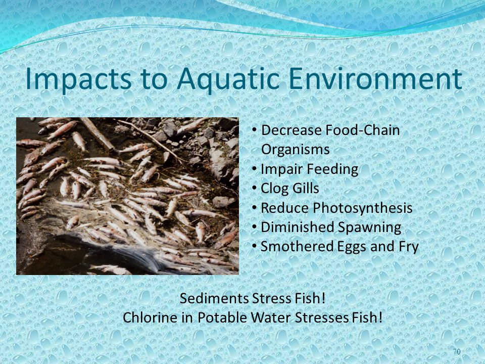 70 Impacts to Aquatic Environment Decrease Food-Chain Organisms Impair Feeding Clog Gills Reduce Photosynthesis Diminished Spawning Smothered Eggs and