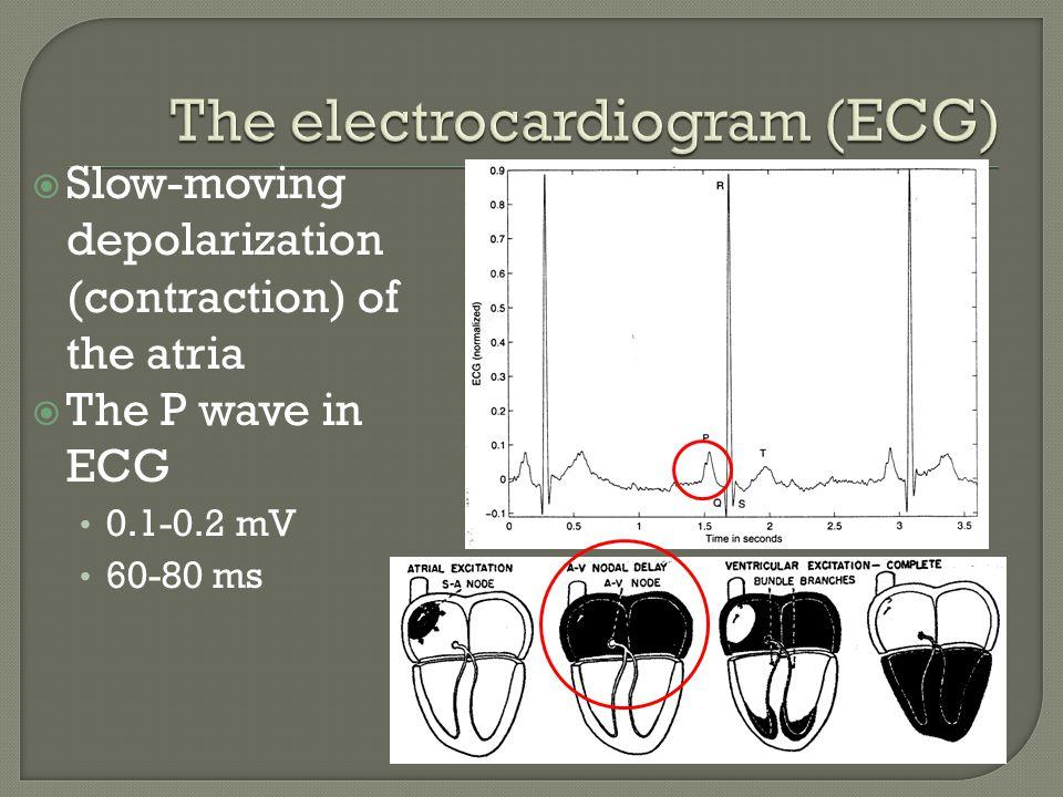 Propagation delay at atrio- venricular (AV) node Normally iso- electric segment PQ segment 60-80 ms