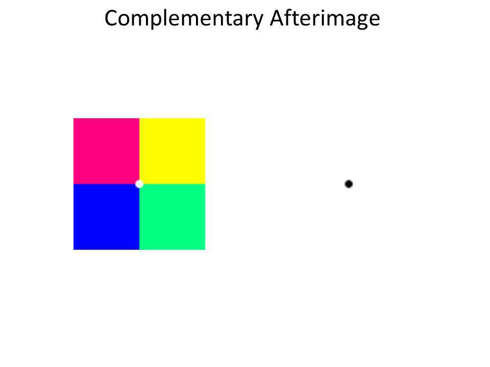 Complementary Afterimage