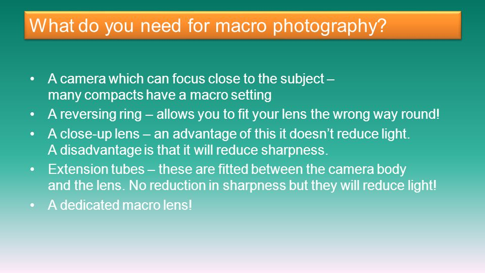 What do you need for macro photography? A camera which can focus close to the subject – many compacts have a macro setting A reversing ring – allows y