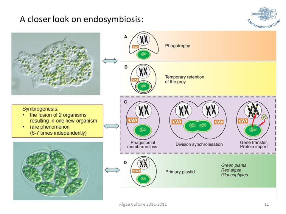 Algae Culture 2011-201211 A closer look on endosymbiosis: