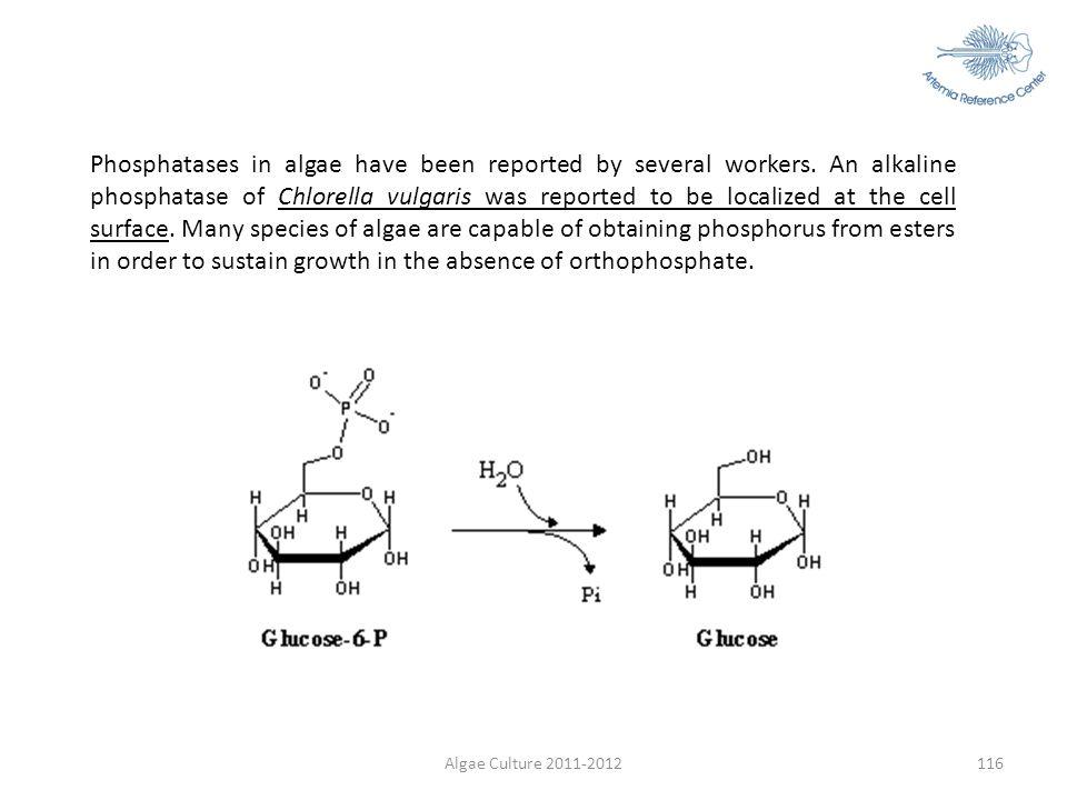 Algae Culture 2011-2012116 Phosphatases in algae have been reported by several workers. An alkaline phosphatase of Chlorella vulgaris was reported to