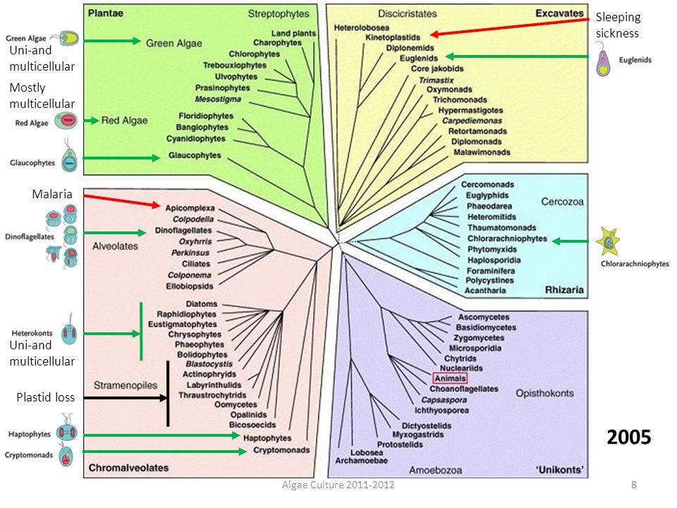 Algae Culture 2011-20128 Plastid loss Malaria Sleeping sickness Uni-and multicellular Mostly multicellular 2005