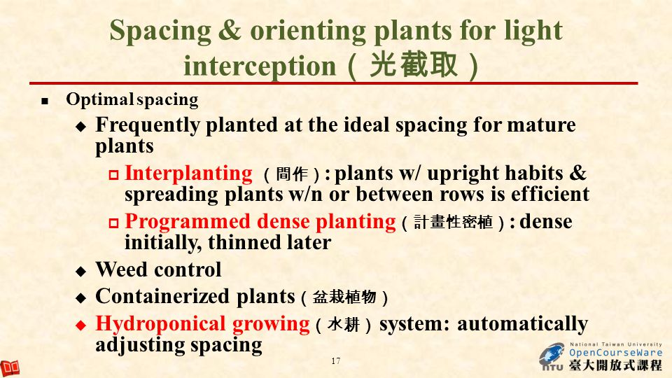 Spacing & orienting plants for light interception Optimal spacing Frequently planted at the ideal spacing for mature plants Interplanting : plants w/