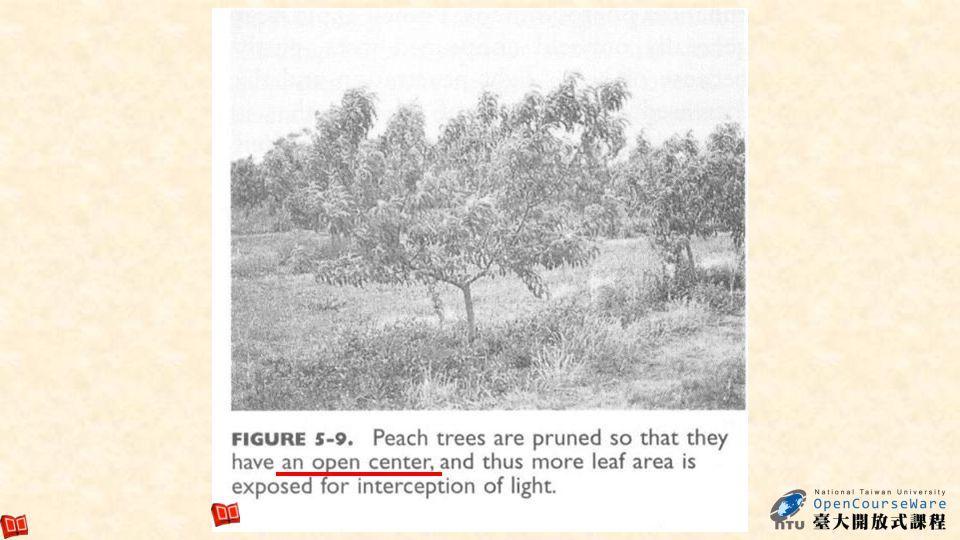23 Maximize light interception(5-10)