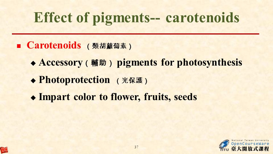 Effect of pigments-- carotenoids Carotenoids Accessory pigments for photosynthesis Photoprotection Impart color to flower, fruits, seeds 37