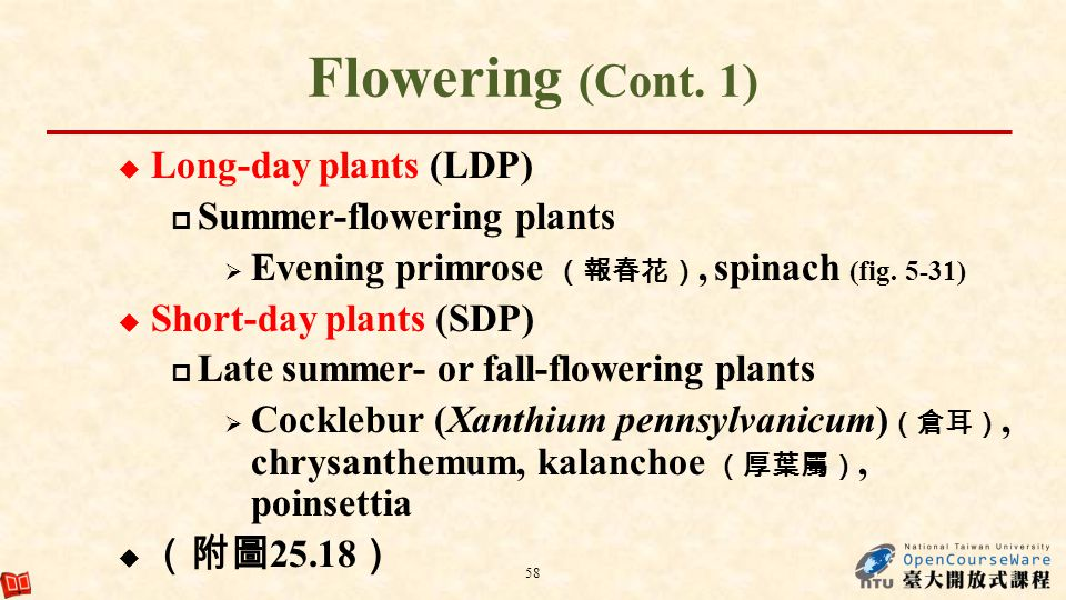 Flowering (Cont. 1) Long-day plants (LDP) Summer-flowering plants Evening primrose, spinach (fig. 5-31) Short-day plants (SDP) Late summer- or fall-fl