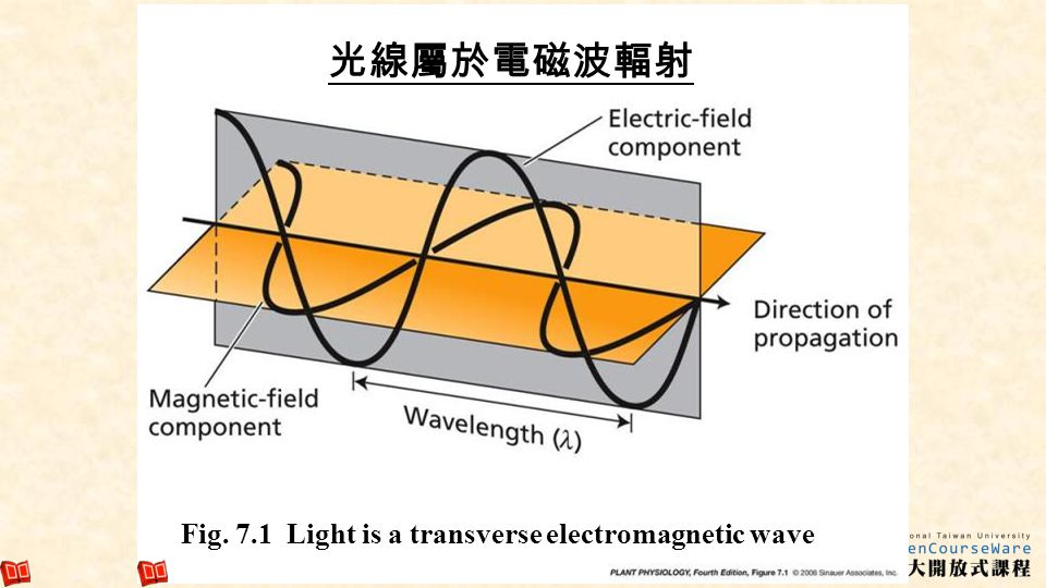 6 Fig. 7.1 Light is a transverse electromagnetic wave