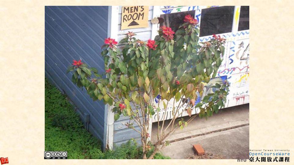 Flowering (Cont.