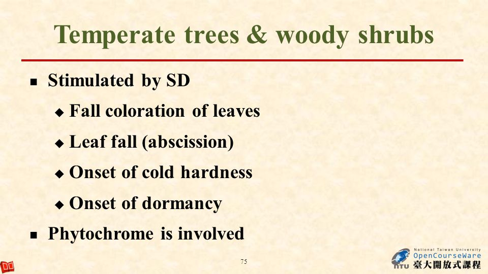 Temperate trees & woody shrubs Stimulated by SD Fall coloration of leaves Leaf fall (abscission) Onset of cold hardness Onset of dormancy Phytochrome