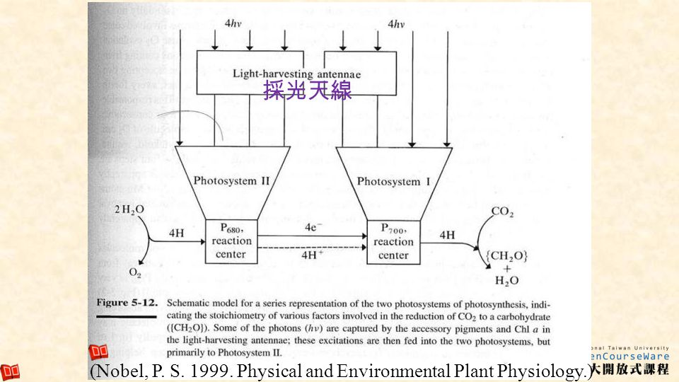 8 (Nobel, P. S. 1999. Physical and Environmental Plant Physiology.)