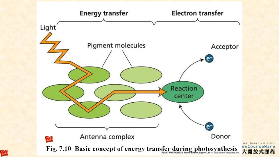 9 Fig. 7.10 Basic concept of energy transfer during photosynthesis