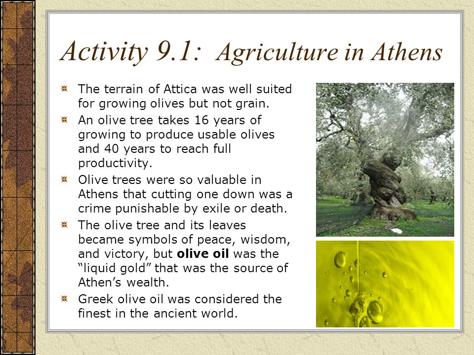 Activity 9.1: Agriculture in Athens The terrain of Attica was well suited for growing olives but not grain.
