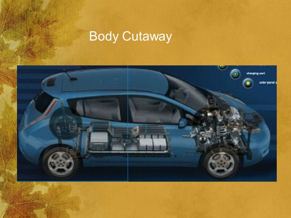 Body Cutaway