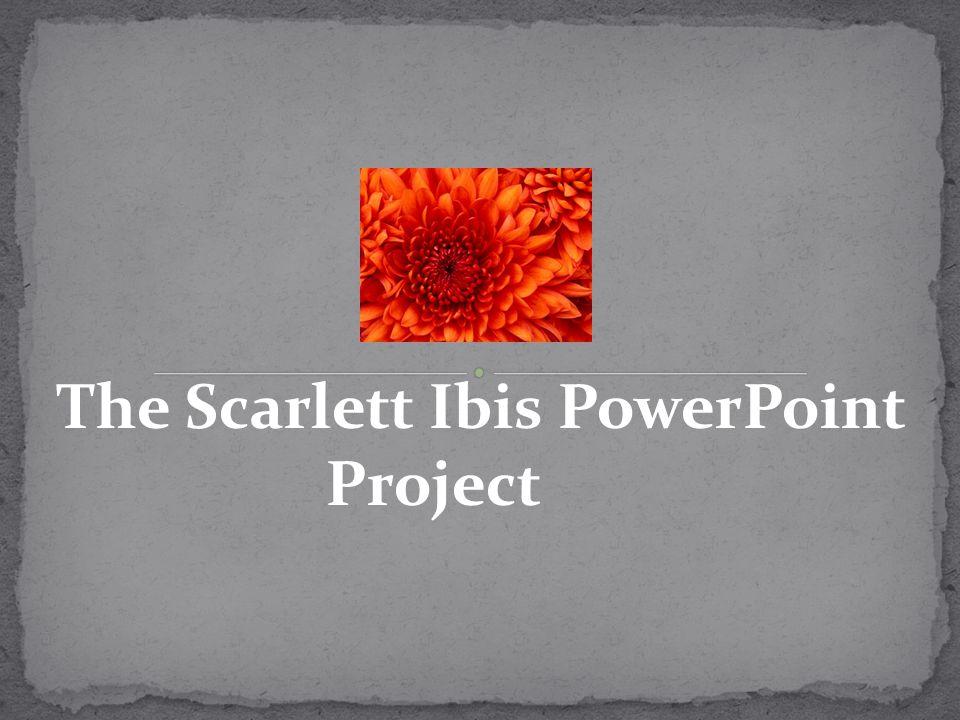 The Scarlett Ibis PowerPoint Project