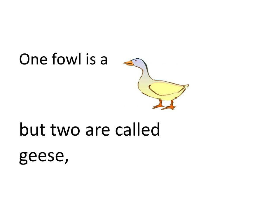 One fowl is a but two are called geese,
