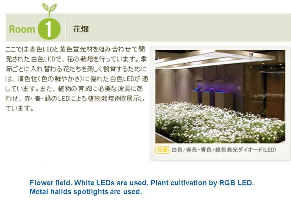 Flower field. White LEDs are used. Plant cultivation by RGB LED. Metal halids spotlights are used.