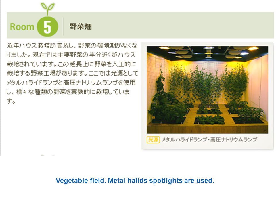Vegetable field. Metal halids spotlights are used.