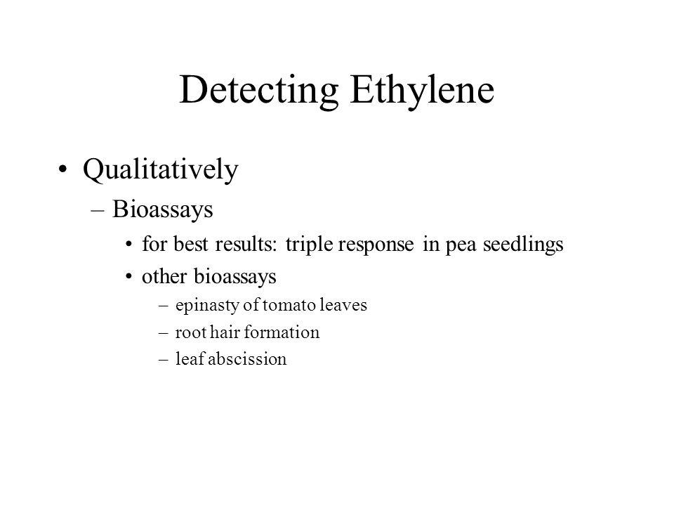Detecting Ethylene Qualitatively –Bioassays for best results: triple response in pea seedlings other bioassays –epinasty of tomato leaves –root hair f