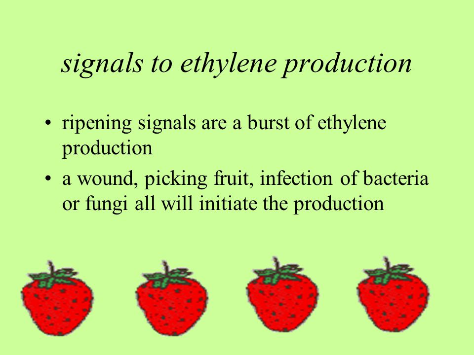signals to ethylene production ripening signals are a burst of ethylene production a wound, picking fruit, infection of bacteria or fungi all will initiate the production