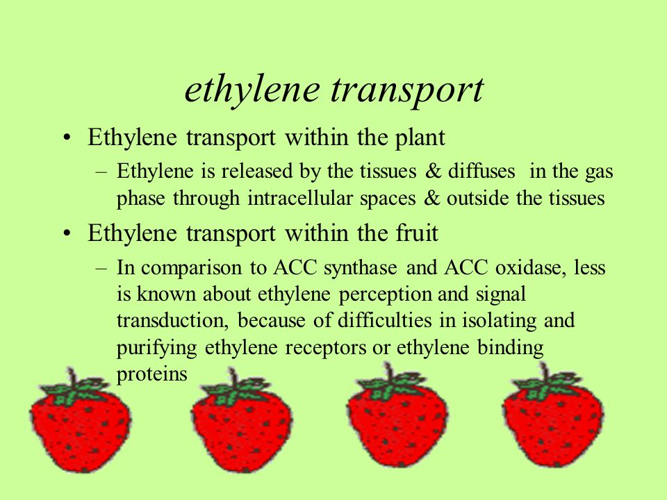 ethylene transport Ethylene transport within the plant –Ethylene is released by the tissues & diffuses in the gas phase through intracellular spaces & outside the tissues Ethylene transport within the fruit –In comparison to ACC synthase and ACC oxidase, less is known about ethylene perception and signal transduction, because of difficulties in isolating and purifying ethylene receptors or ethylene binding proteins