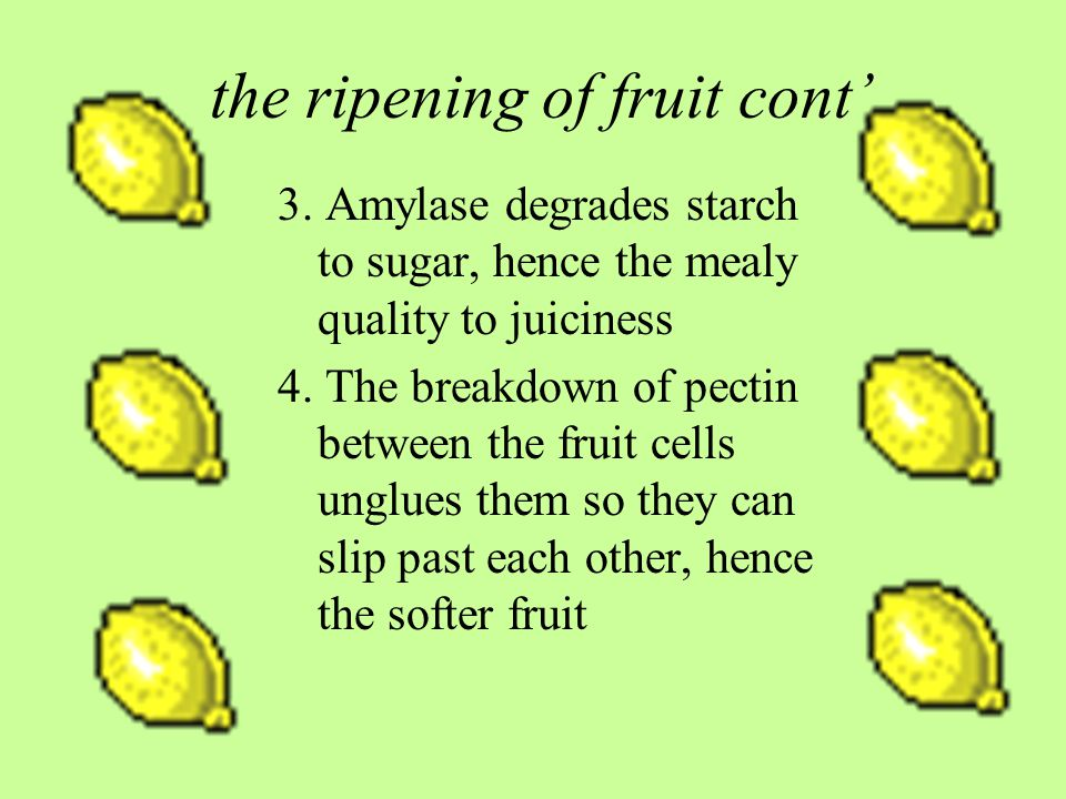 the ripening of fruit cont 3.
