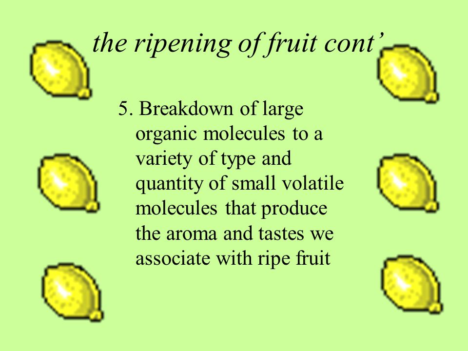 the ripening of fruit cont 5.