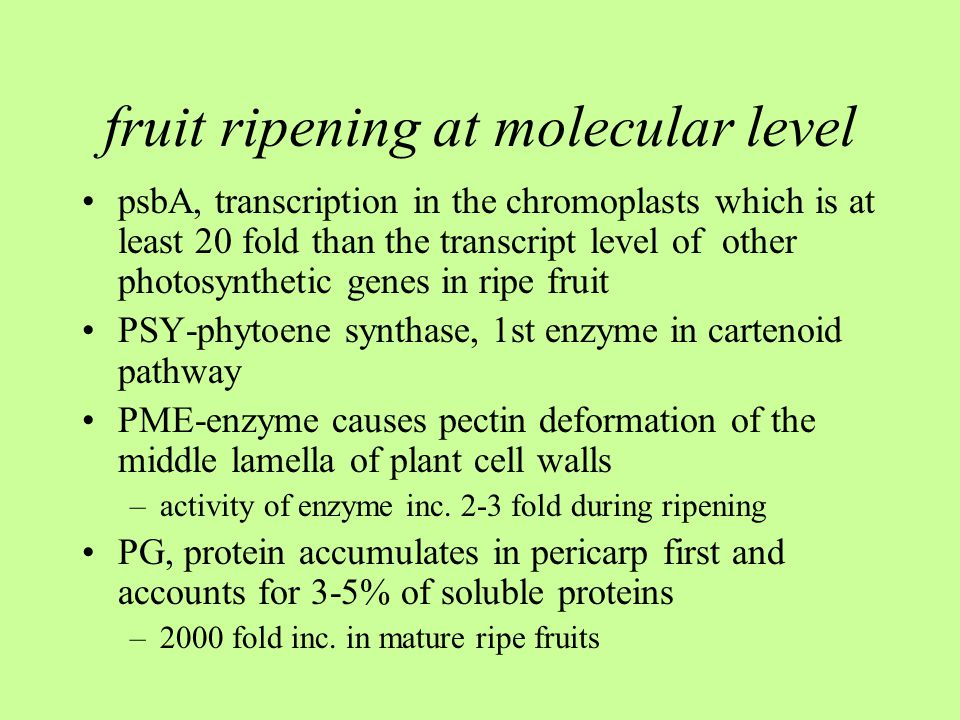 fruit ripening at molecular level psbA, transcription in the chromoplasts which is at least 20 fold than the transcript level of other photosynthetic genes in ripe fruit PSY-phytoene synthase, 1st enzyme in cartenoid pathway PME-enzyme causes pectin deformation of the middle lamella of plant cell walls –activity of enzyme inc.