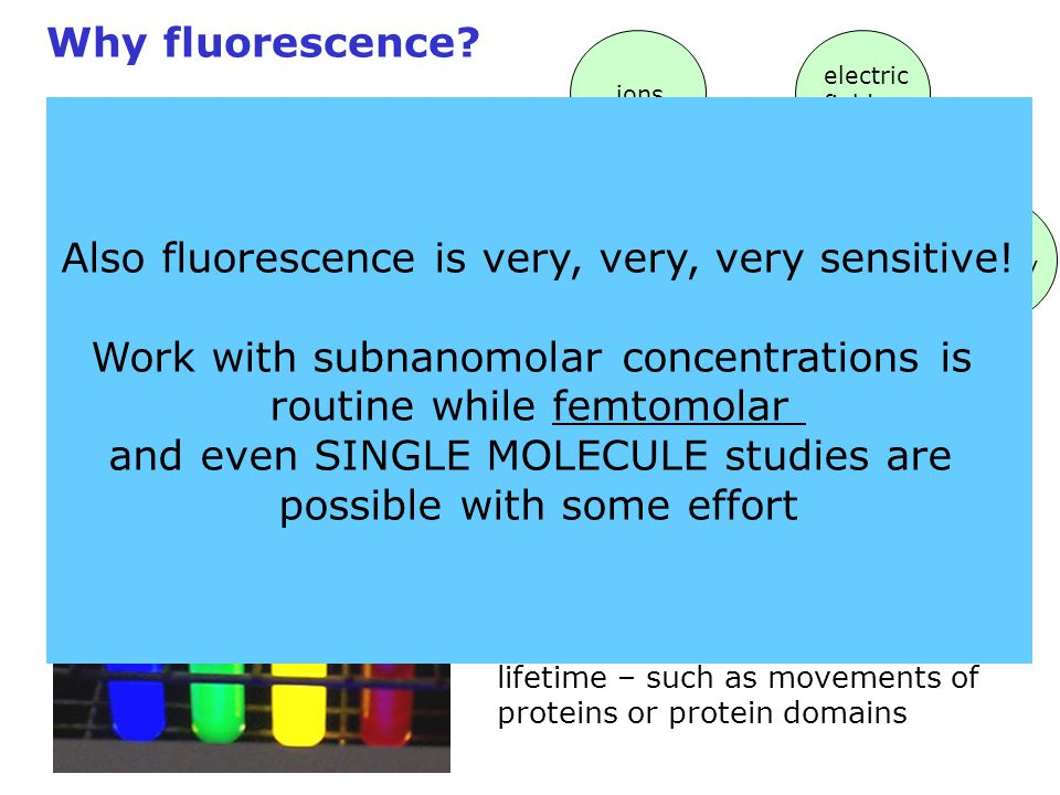 Why fluorescence? Fluorescent Probe ions electric fields viscosity polarity pH temperature Fluorescence Probes are essentially molecular stopwatches w