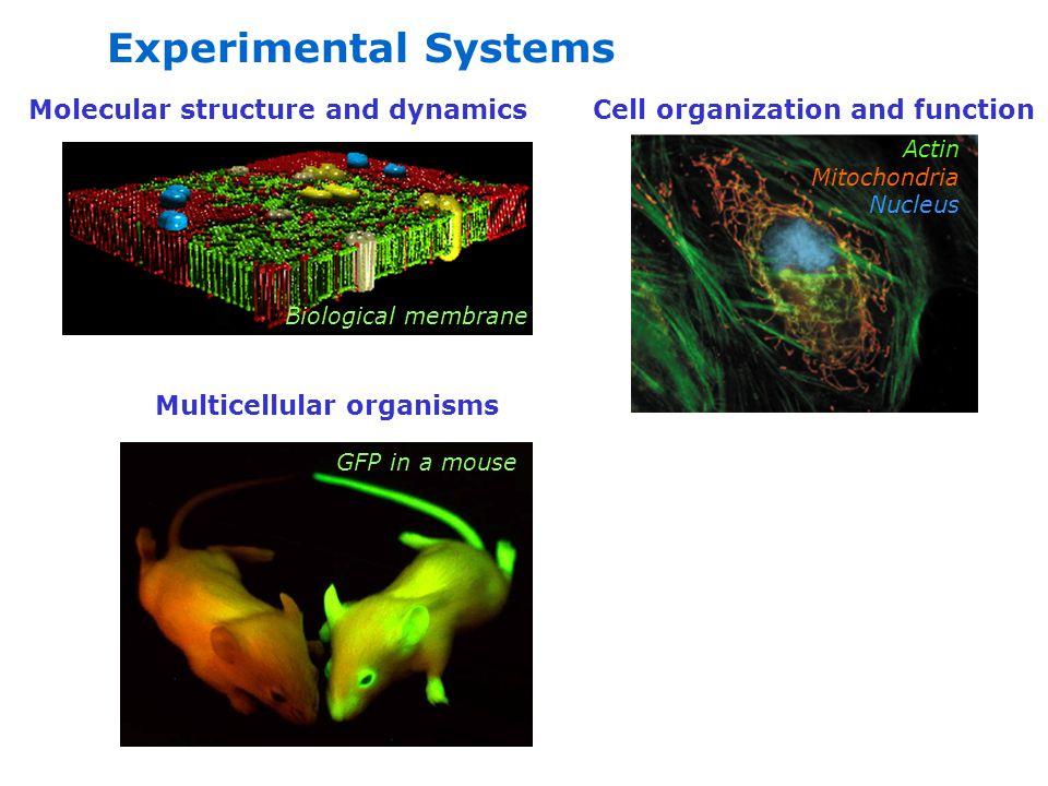 Instrumentation Microscopes Fluorimeters High throughput platereaders